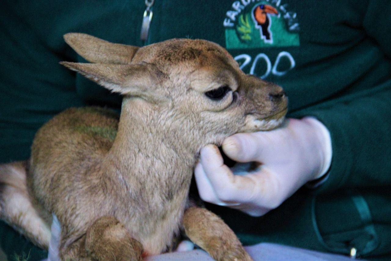 Hayvanat bahçesinin yeni üyesi dünyaya gözlerini açtı